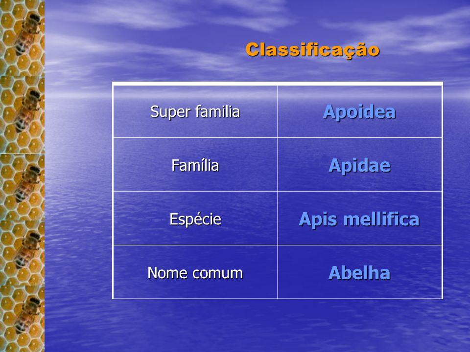 Classificação Apoidea Apidae Apis mellifica Abelha Espécie