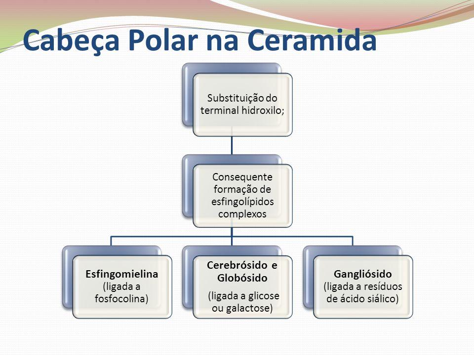 Cabeça Polar na Ceramida