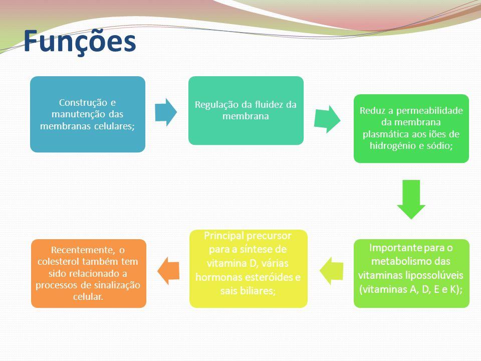 Funções Construção e manutenção das membranas celulares; Regulação da fluidez da membrana.