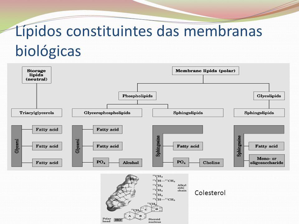 Lípidos constituintes das membranas biológicas