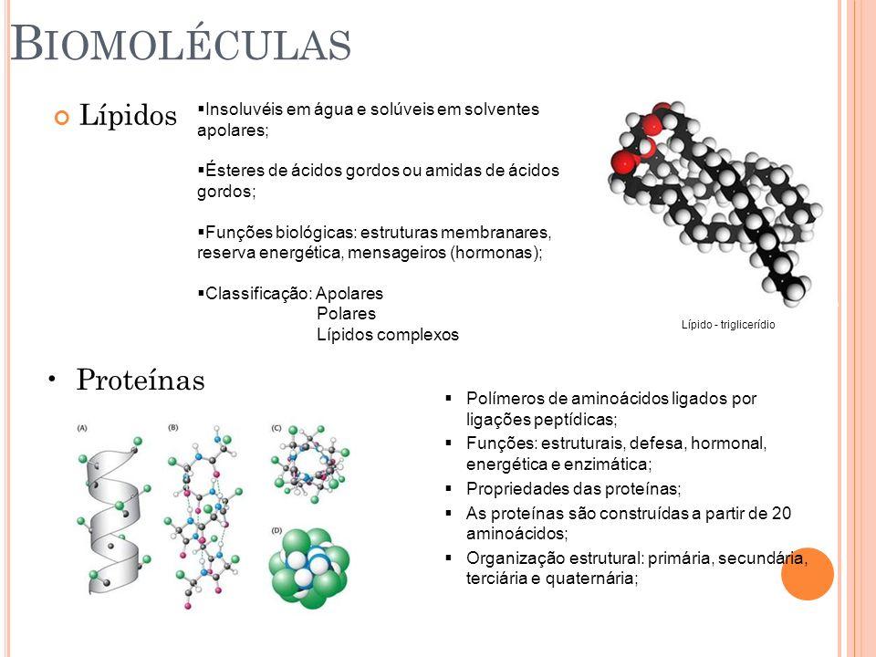 Biomoléculas Lípidos Proteínas