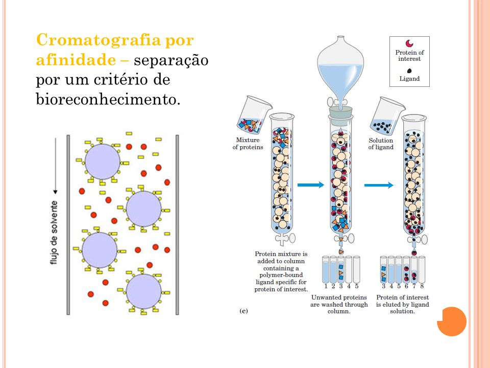 Cromatografia por afinidade – separação por um critério de bioreconhecimento.