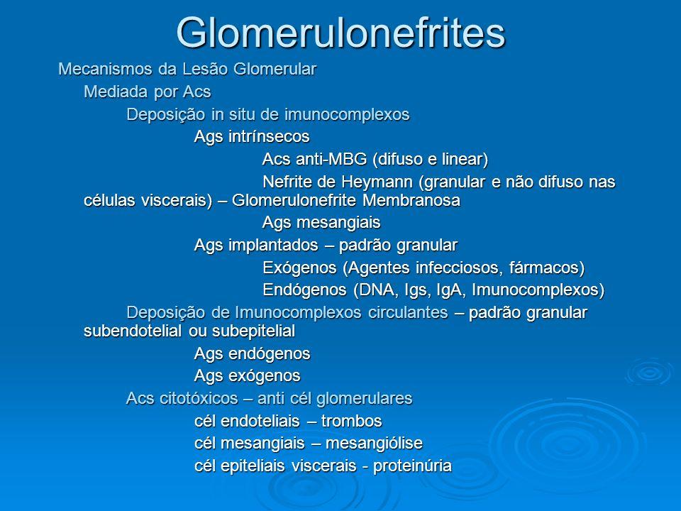Glomerulonefrites Mecanismos da Lesão Glomerular Mediada por Acs