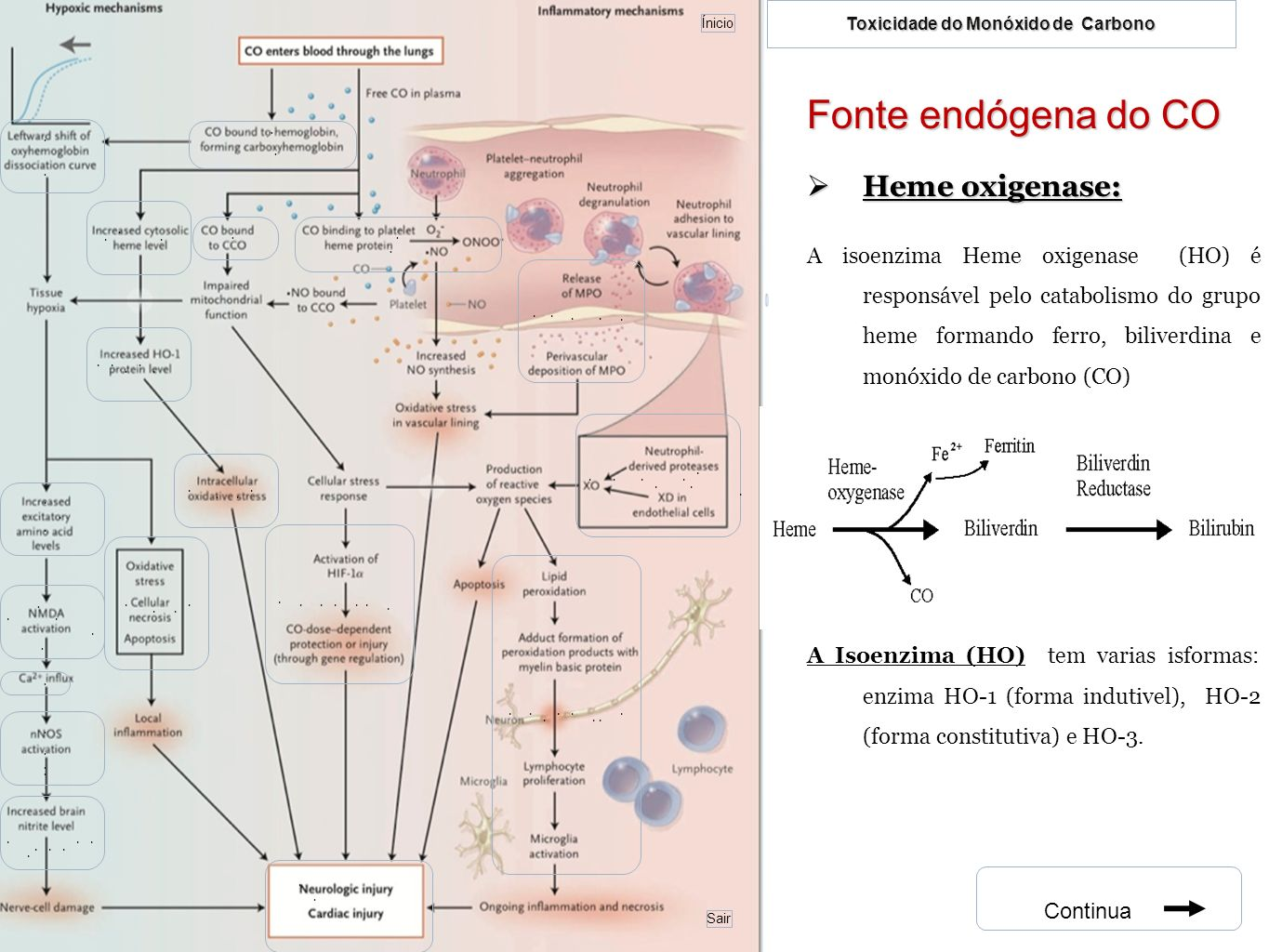 Fonte endógena do CO Heme oxigenase: