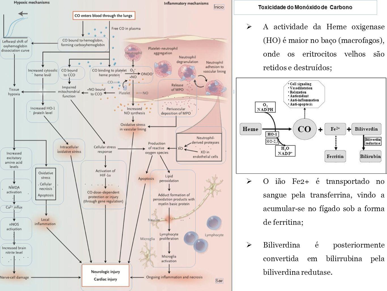 A actividade da Heme oxigenase (HO) é maior no baço (macrofagos), onde os eritrocitos velhos são retidos e destruídos;