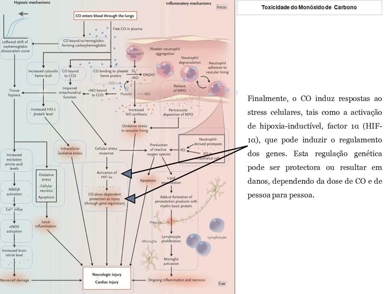 Finalmente, o CO induz respostas ao stress celulares, tais como a activação de hipoxia-inductível, factor 1α (HIF-1α), que pode induzir o regulamento dos genes.