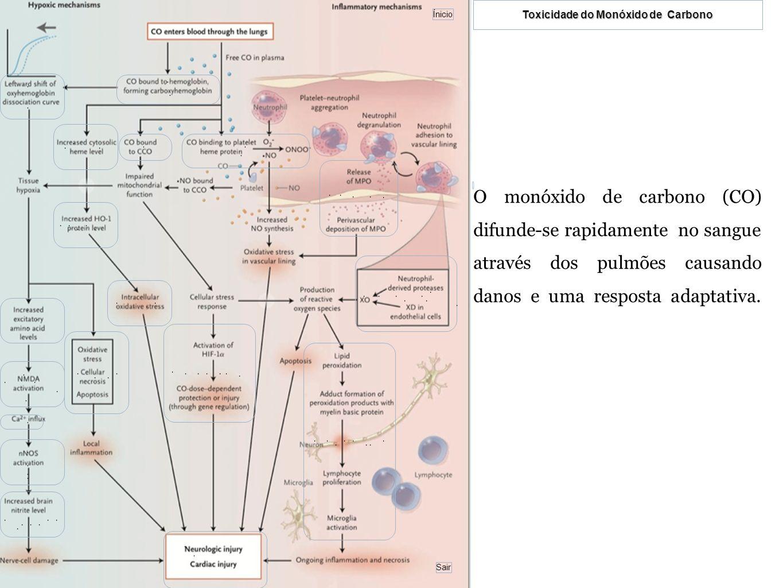 O monóxido de carbono (CO) difunde-se rapidamente no sangue através dos pulmões causando danos e uma resposta adaptativa.