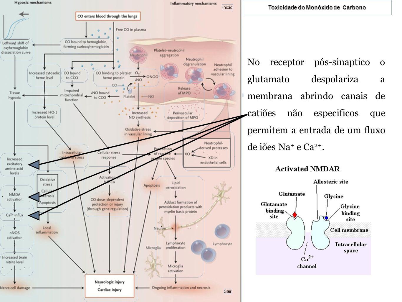 No receptor pós-sinaptico o glutamato despolariza a membrana abrindo canais de catiões não especificos que permitem a entrada de um fluxo de iões Na+ e Ca2+.