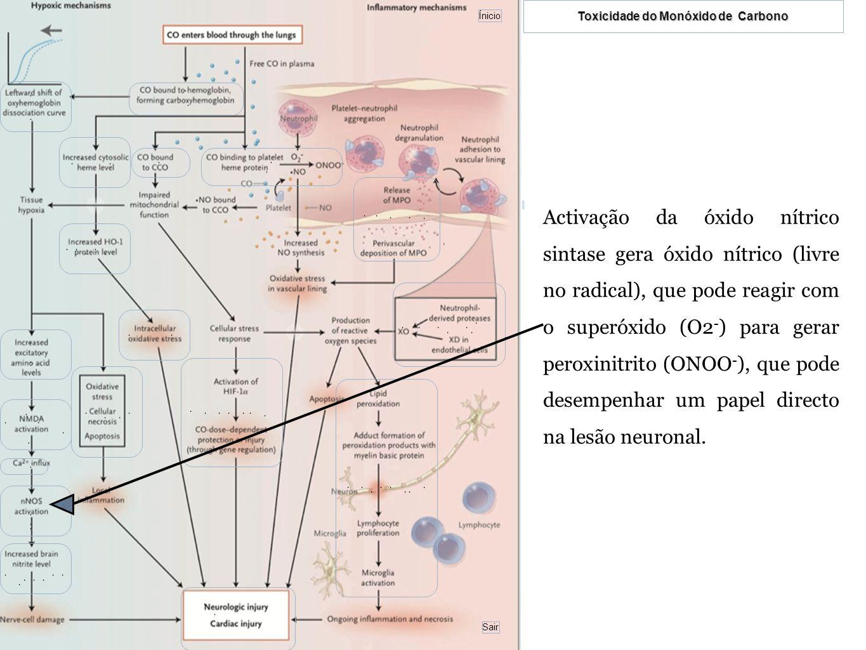 Activação da óxido nítrico sintase gera óxido nítrico (livre no radical), que pode reagir com o superóxido (O2-) para gerar peroxinitrito (ONOO-), que pode desempenhar um papel directo na lesão neuronal.