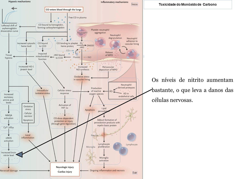 Os níveis de nitrito aumentam bastante, o que leva a danos das células nervosas.