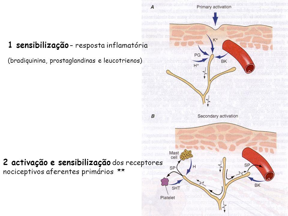 1 sensibilização – resposta inflamatória