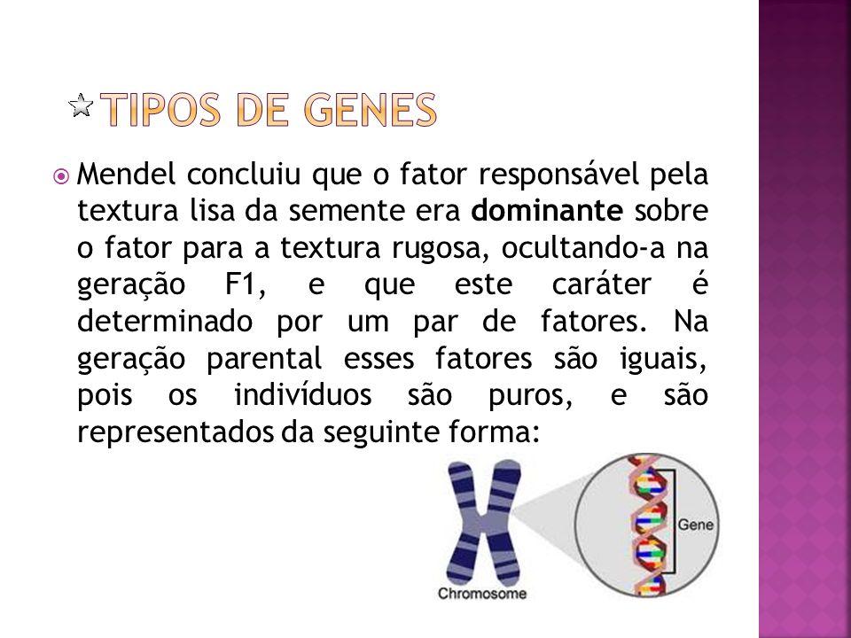 Tipos de Genes