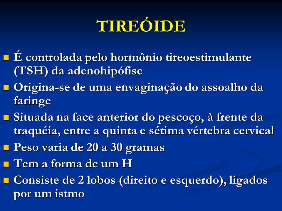 TIREÓIDE É controlada pelo hormônio tireoestimulante (TSH) da adenohipófise. Origina-se de uma envaginação do assoalho da faringe.