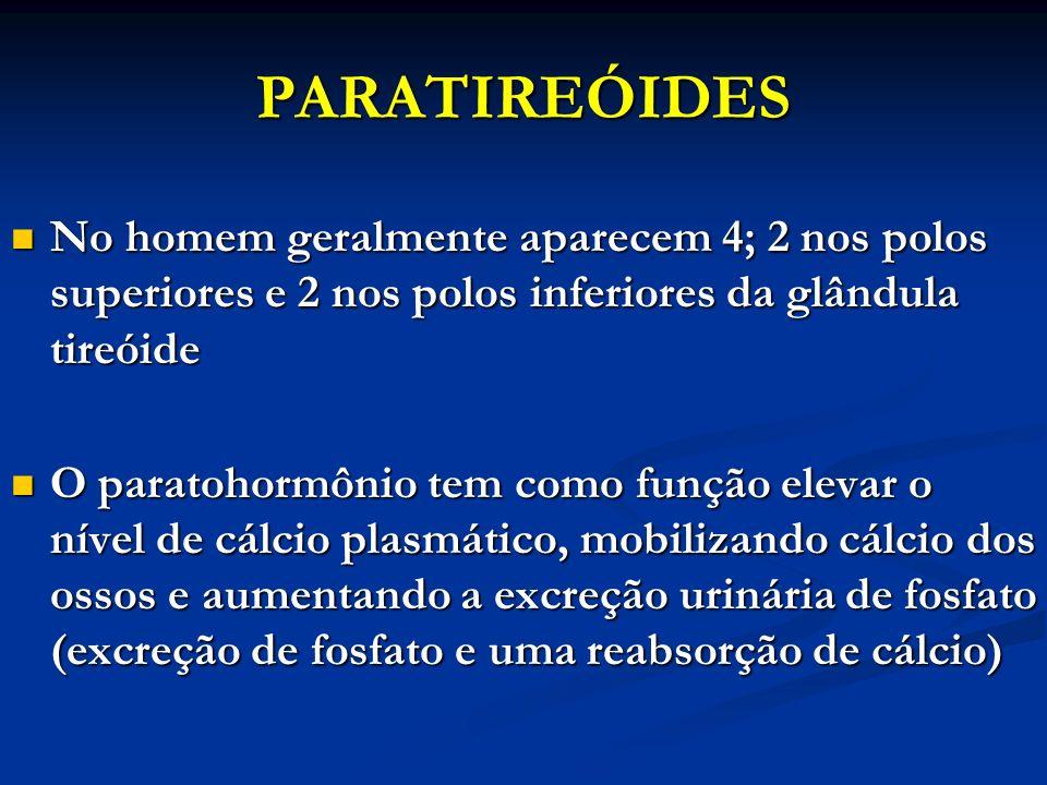 PARATIREÓIDES No homem geralmente aparecem 4; 2 nos polos superiores e 2 nos polos inferiores da glândula tireóide.