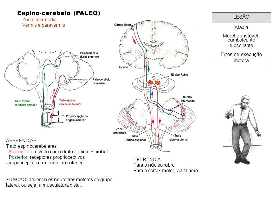 Espino-cerebelo (PALEO)