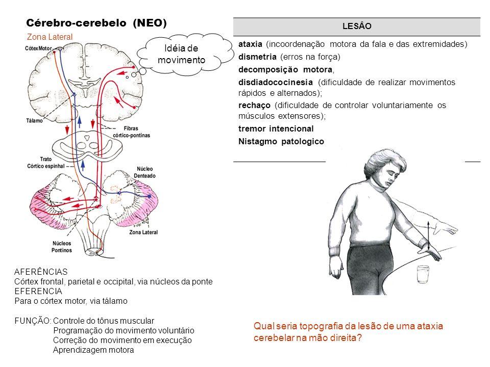 Cérebro-cerebelo (NEO)
