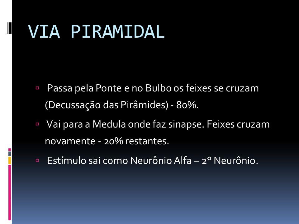 VIA PIRAMIDAL Passa pela Ponte e no Bulbo os feixes se cruzam (Decussação das Pirâmides) - 80%.