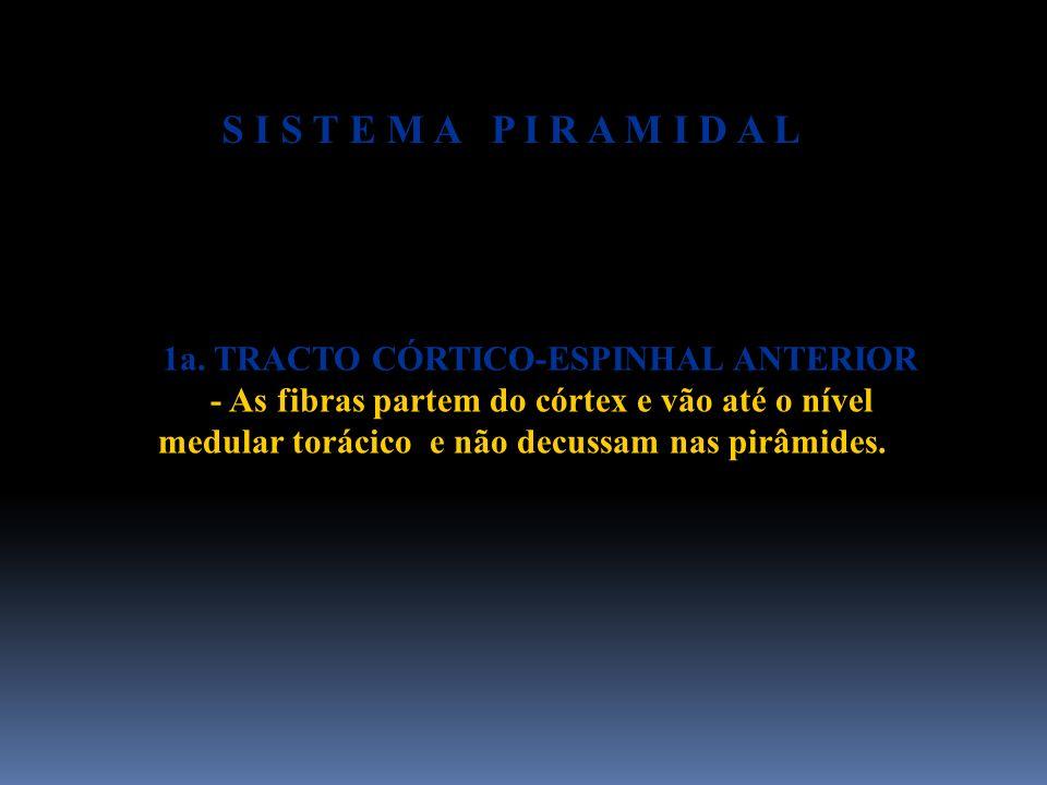 1a. TRACTO CÓRTICO-ESPINHAL ANTERIOR