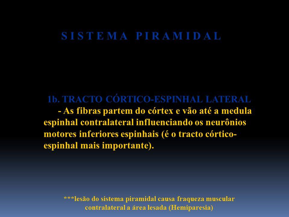 1b. TRACTO CÓRTICO-ESPINHAL LATERAL