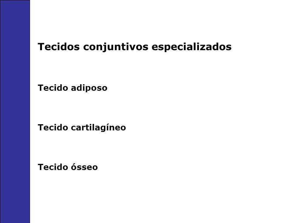 Tecidos conjuntivos especializados