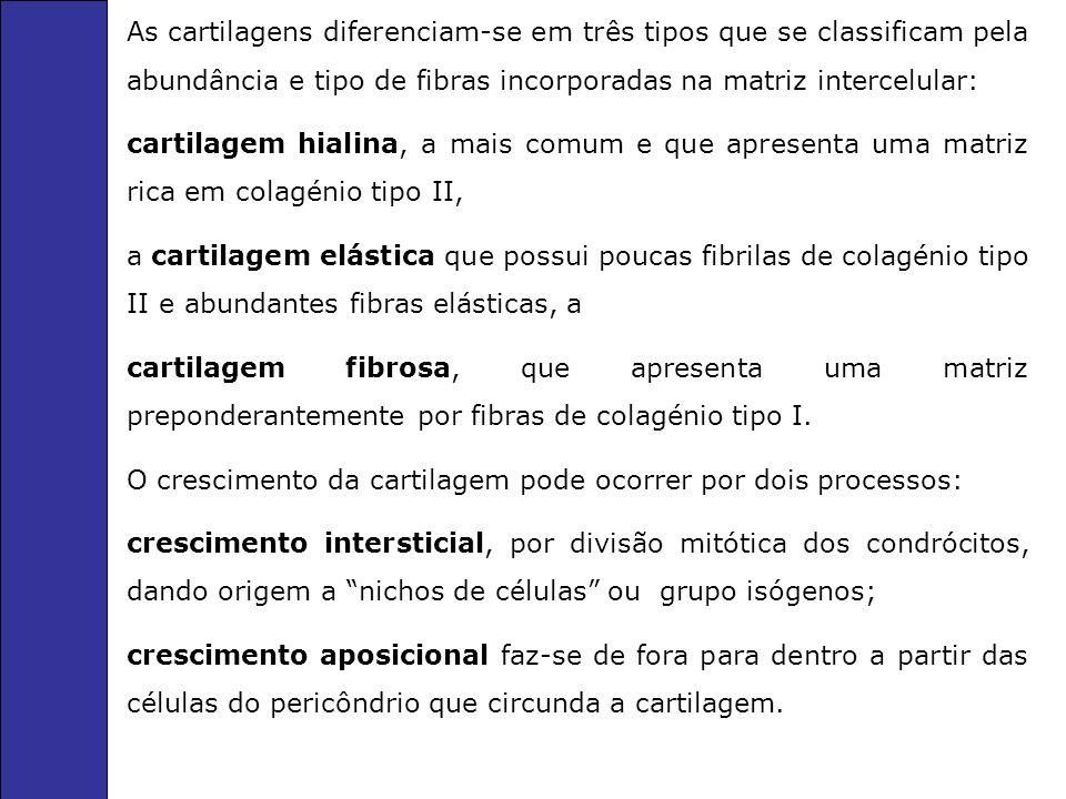 As cartilagens diferenciam-se em três tipos que se classificam pela abundância e tipo de fibras incorporadas na matriz intercelular: