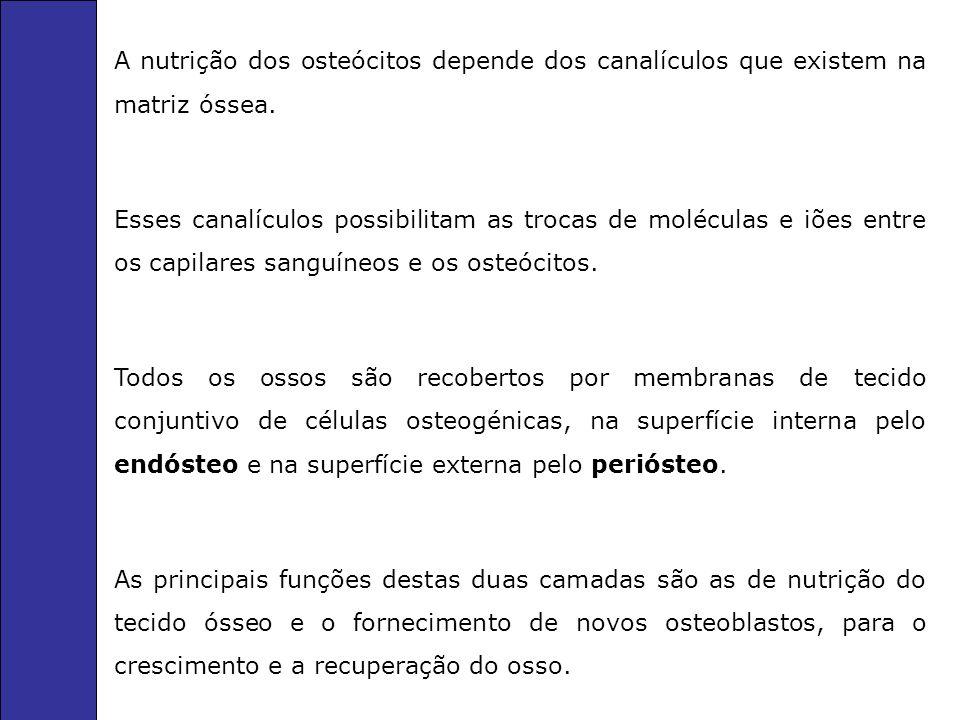 A nutrição dos osteócitos depende dos canalículos que existem na matriz óssea.