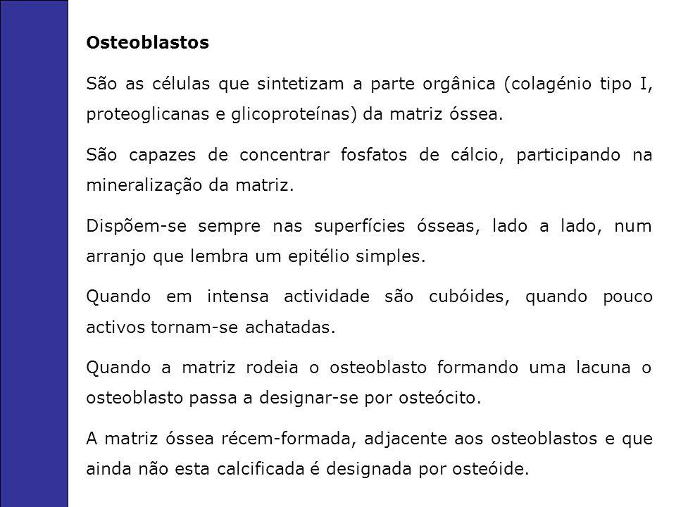 Osteoblastos São as células que sintetizam a parte orgânica (colagénio tipo I, proteoglicanas e glicoproteínas) da matriz óssea.