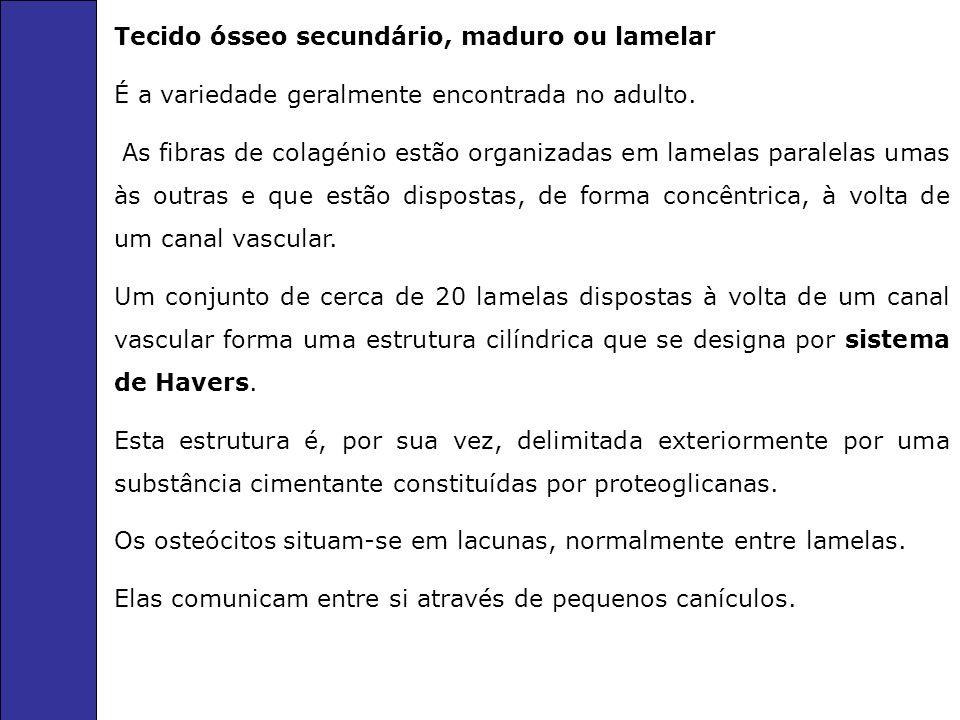 Tecido ósseo secundário, maduro ou lamelar