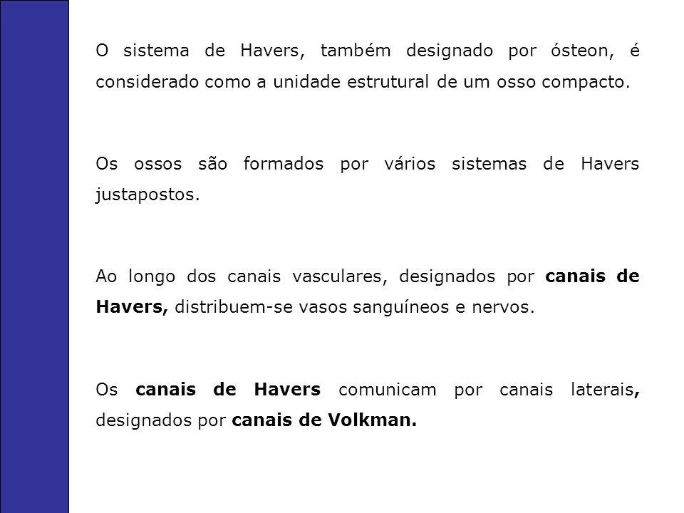 O sistema de Havers, também designado por ósteon, é considerado como a unidade estrutural de um osso compacto.