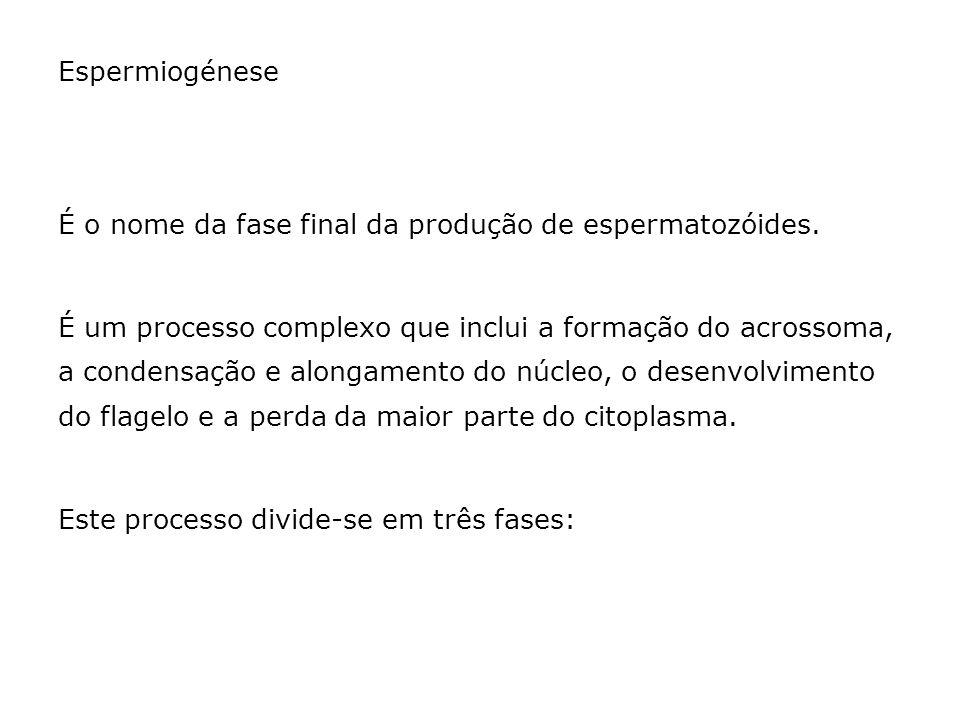 Espermiogénese É o nome da fase final da produção de espermatozóides.