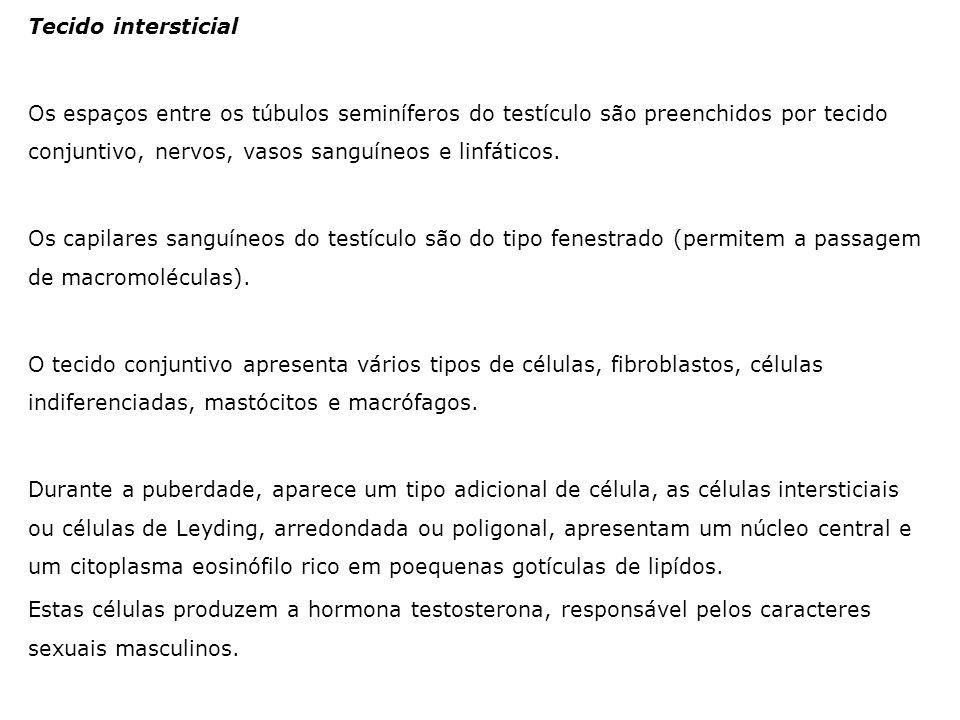 Tecido intersticial