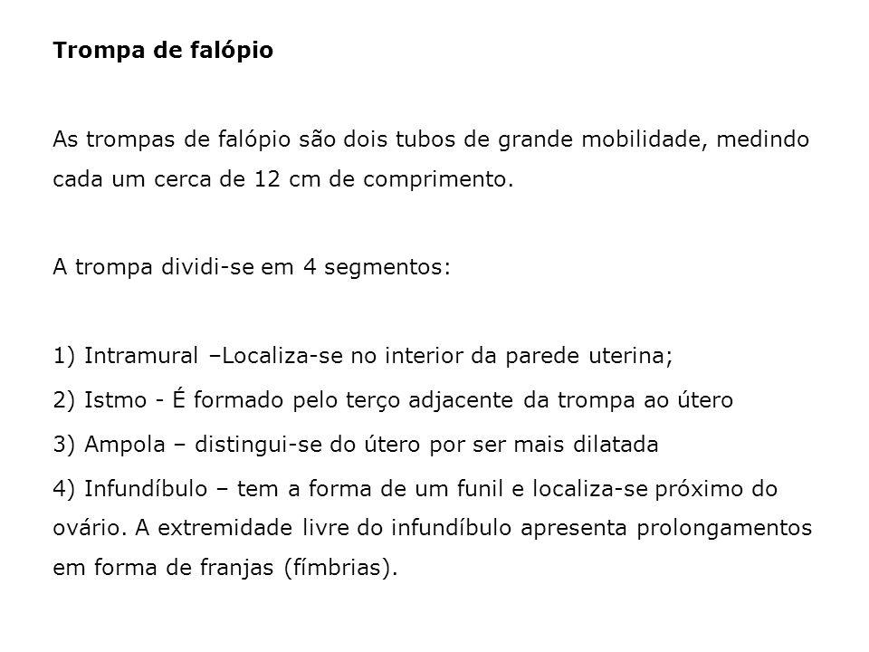 Trompa de falópioAs trompas de falópio são dois tubos de grande mobilidade, medindo cada um cerca de 12 cm de comprimento.