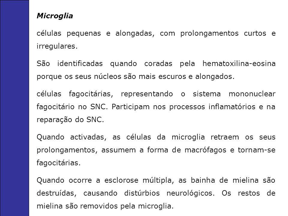 Microglia células pequenas e alongadas, com prolongamentos curtos e irregulares.