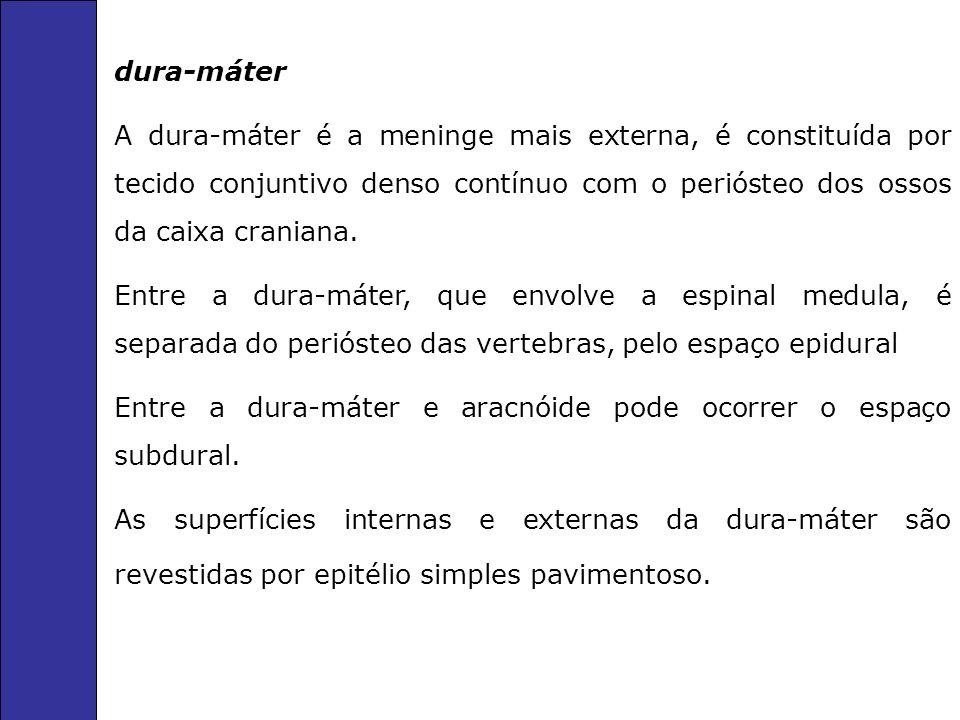 dura-máter A dura-máter é a meninge mais externa, é constituída por tecido conjuntivo denso contínuo com o periósteo dos ossos da caixa craniana.