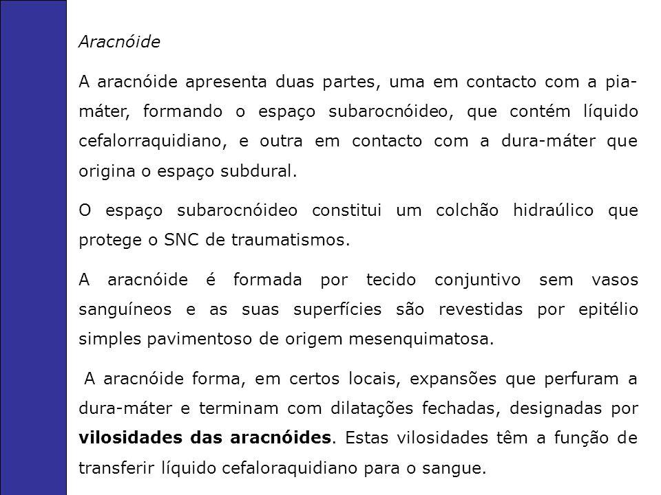 Aracnóide