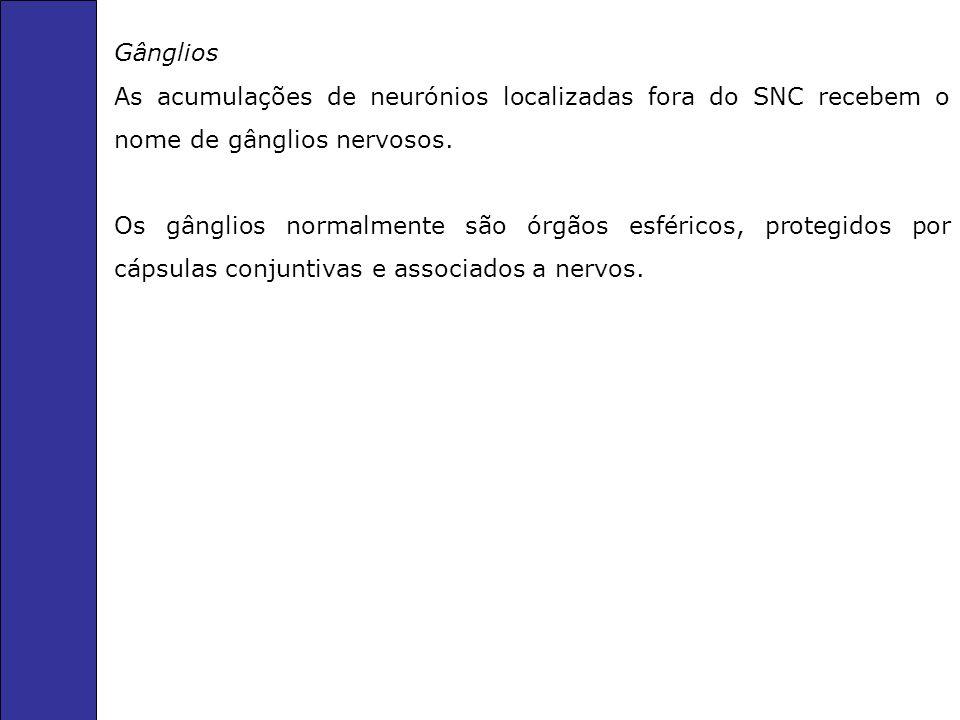 Gânglios As acumulações de neurónios localizadas fora do SNC recebem o nome de gânglios nervosos.