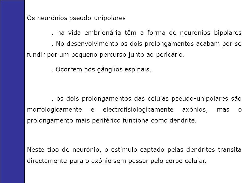 Os neurónios pseudo-unipolares