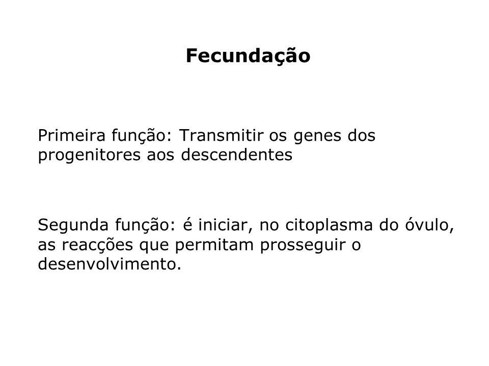Fecundação Primeira função: Transmitir os genes dos progenitores aos descendentes.
