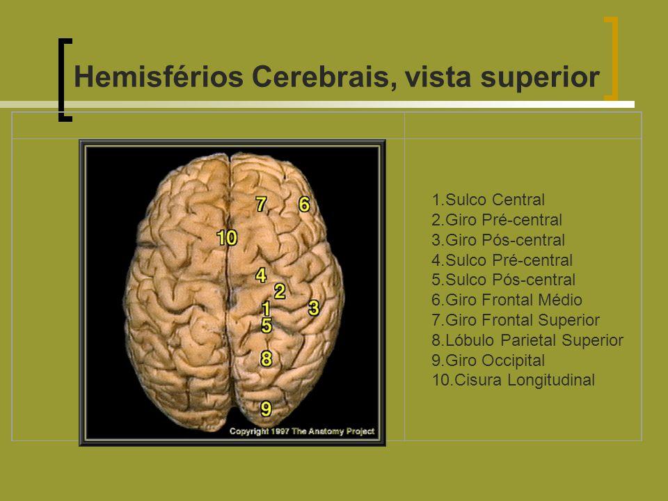 Hemisférios Cerebrais, vista superior