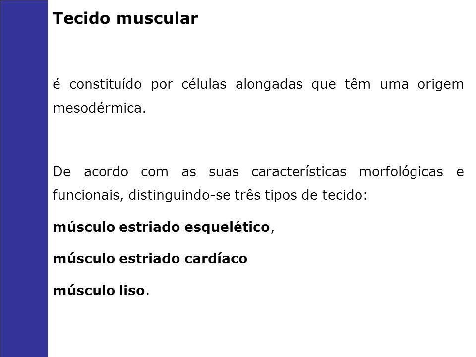 Tecido muscular é constituído por células alongadas que têm uma origem mesodérmica.