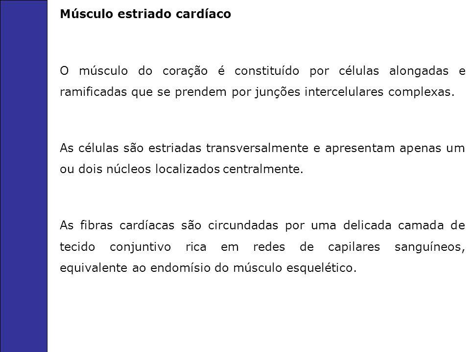 Músculo estriado cardíaco