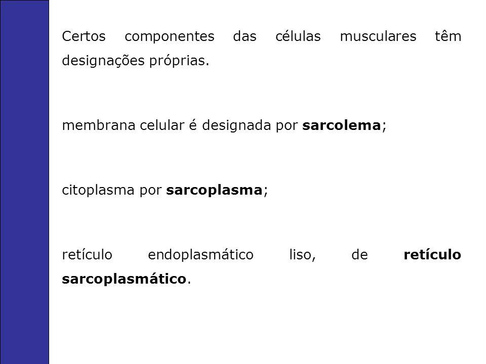 Certos componentes das células musculares têm designações próprias.