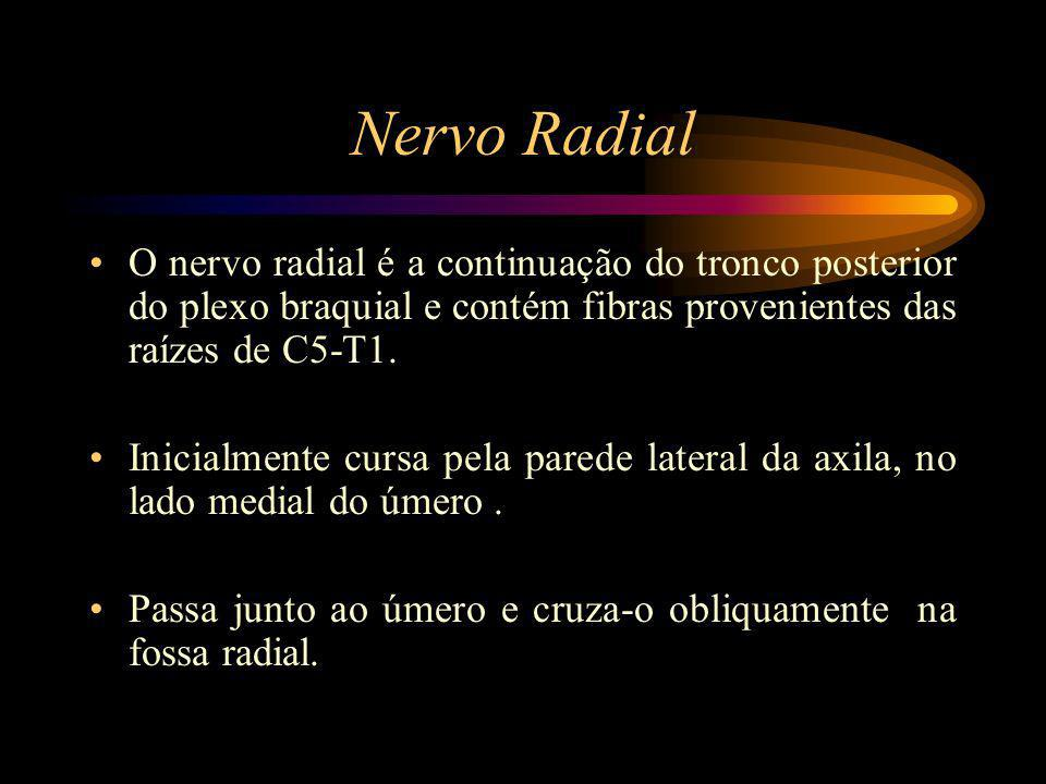 Nervo Radial O nervo radial é a continuação do tronco posterior do plexo braquial e contém fibras provenientes das raízes de C5-T1.
