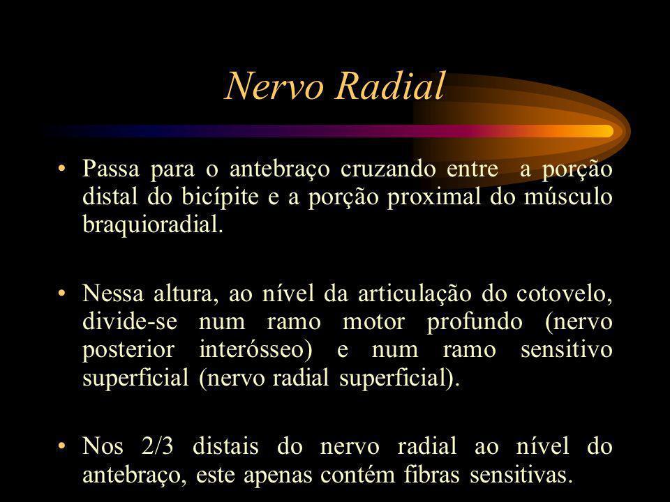 Nervo Radial Passa para o antebraço cruzando entre a porção distal do bicípite e a porção proximal do músculo braquioradial.