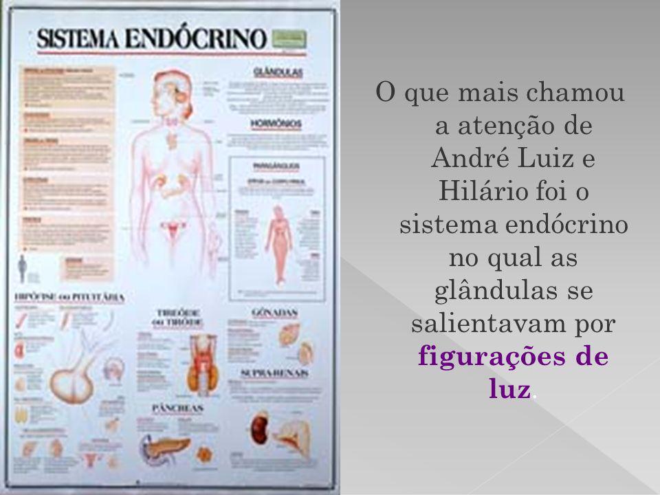 O que mais chamou a atenção de André Luiz e Hilário foi o sistema endócrino no qual as glândulas se salientavam por figurações de luz.