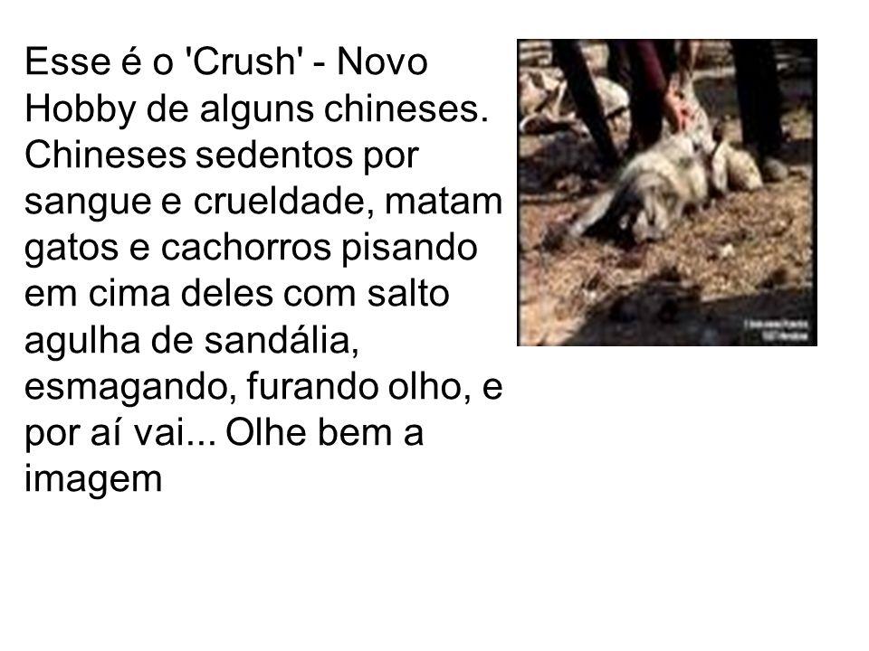 Esse é o Crush - Novo Hobby de alguns chineses