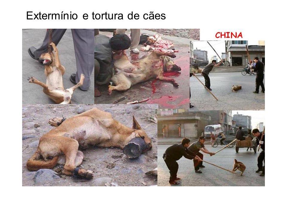 Extermínio e tortura de cães