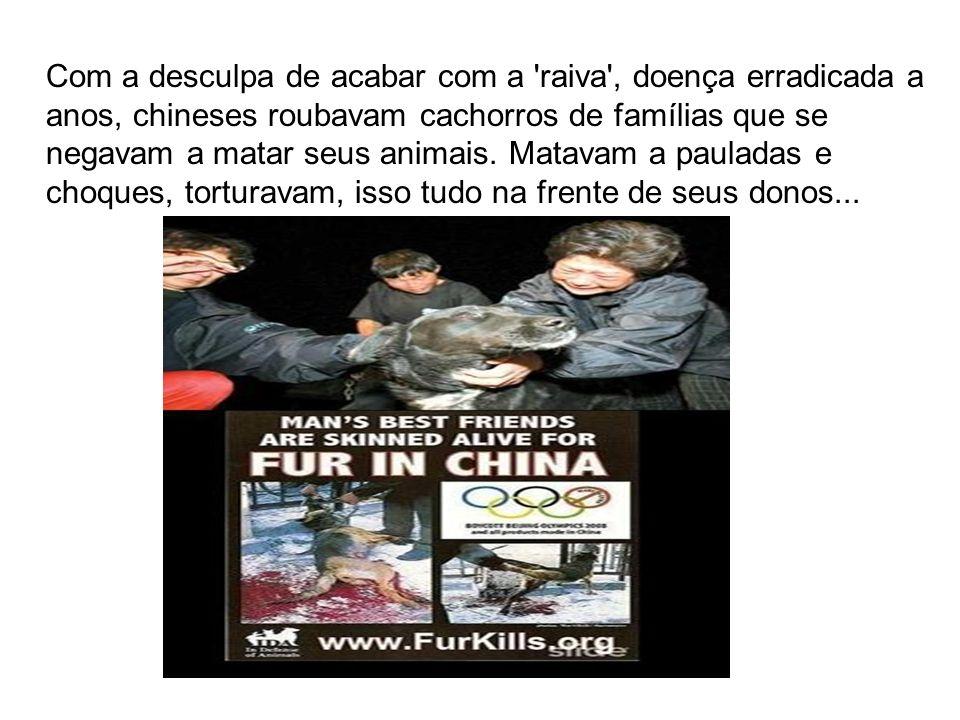 Com a desculpa de acabar com a raiva , doença erradicada a anos, chineses roubavam cachorros de famílias que se negavam a matar seus animais.