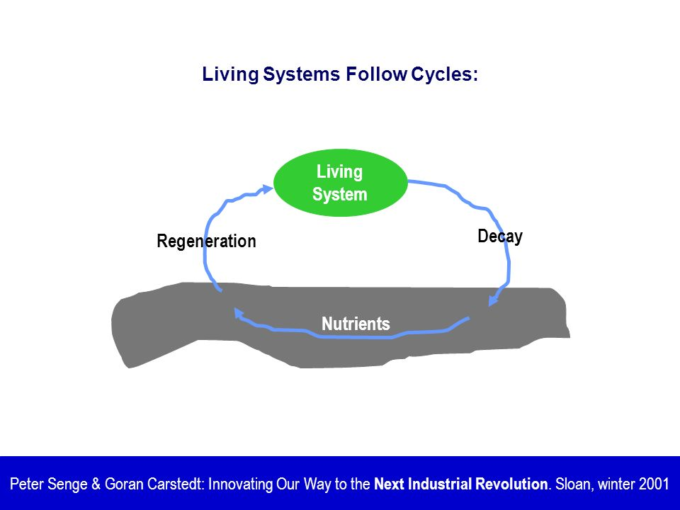 Living Systems Follow Cycles: