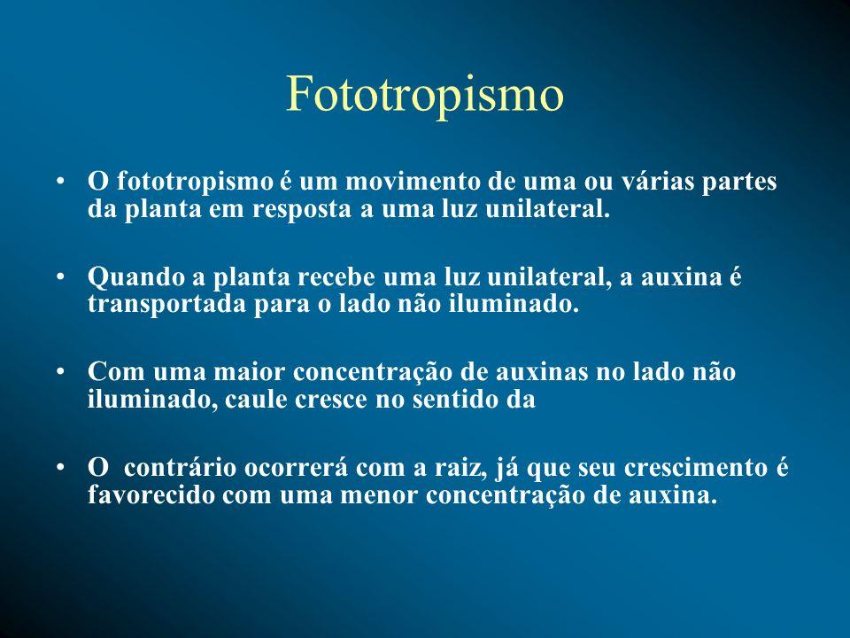 FototropismoO fototropismo é um movimento de uma ou várias partes da planta em resposta a uma luz unilateral.